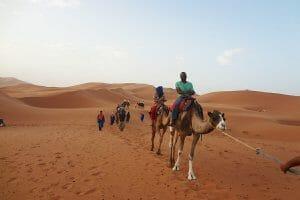Entrepreneur Damon Brown riding camel in Egypt