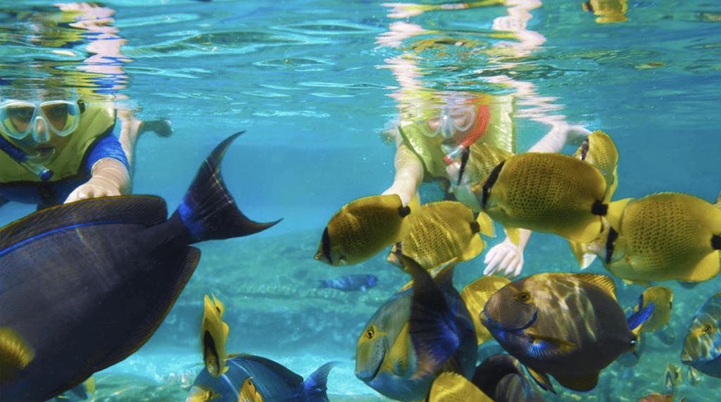 Rainbow Reef at Disney Aulani Hawaii