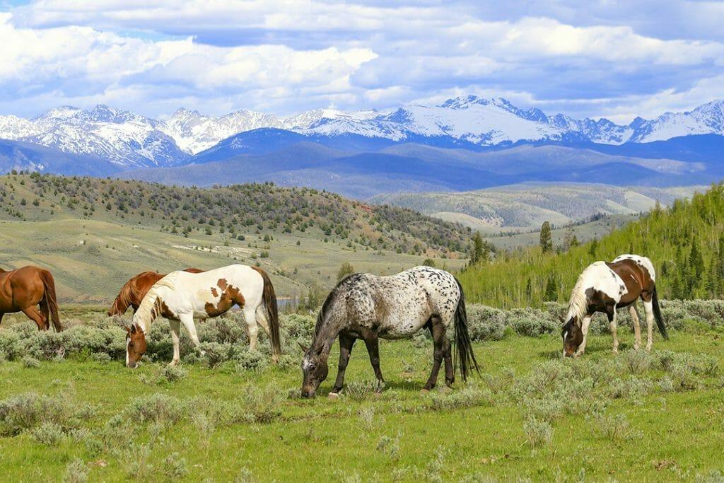 C Lazy U- horses grazing
