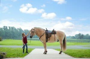 Girl petting horse at Salamander Resort