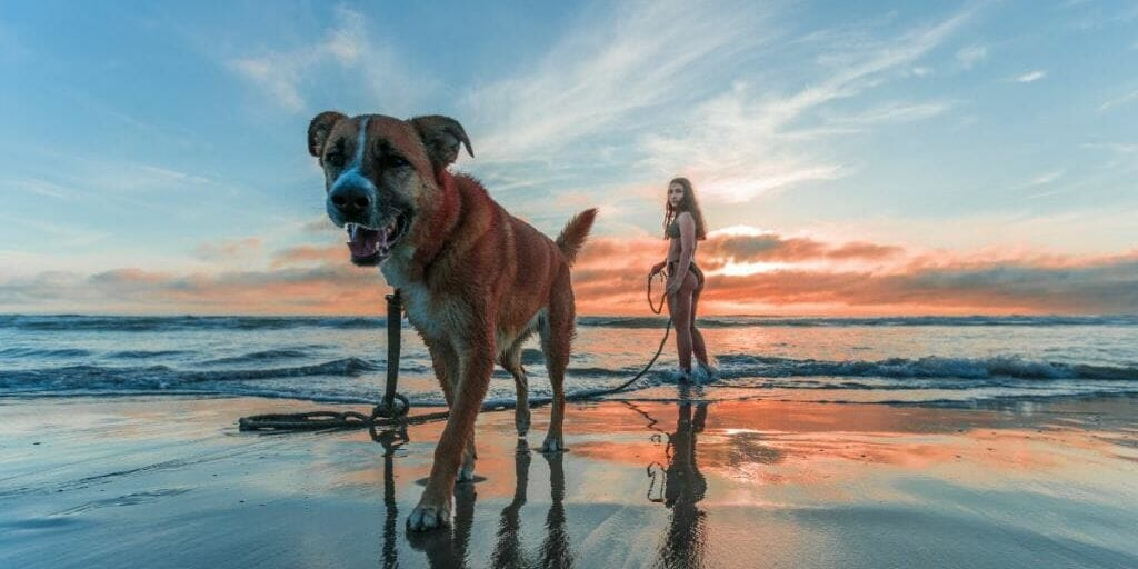 Taking your dog on vacation